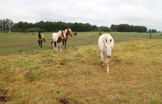Schouten+wil+maatlatstal+voor+paarden