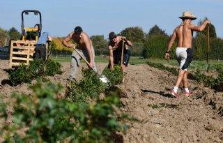 Minder+arbeidsmigranten+werkzaam+in+tuinbouw