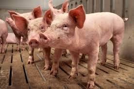 Politici+veroordelen+dierenactivisten+Boxtel