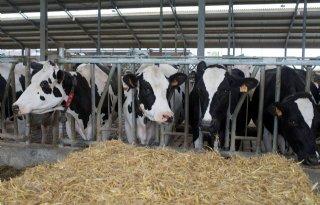 Neem+tijd+voor+droogzetten+productieve+koe
