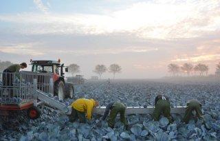 De+Boer+oogst+dit+jaar+kleinere+kolen