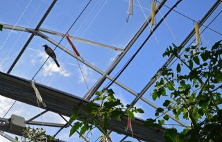 Glastuinbouw+mist+groene+innovaties+in+verbrede+SDE%2B%2B