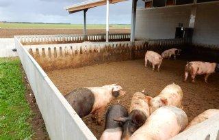De+eerste+varkensstal+met+2+sterrenvlees