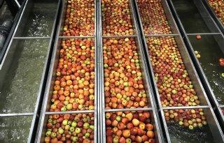 Fruitcampagne+moet+kinderen+aan+appel+en+peer+krijgen