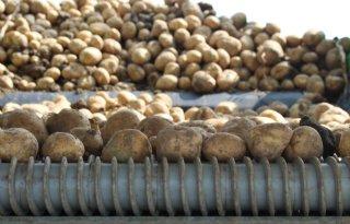 Groter+areaal+levert+grotere+Europese+aardappeloogst