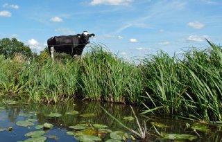 App+om+grondwaterpeil+veenweidegebied+te+regelen