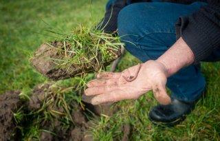 Extreem+actief+bodemleven+stuwt+mineralisatie