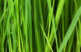 Bijproducten slachterij en opwaarderen van gras