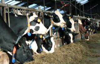 Lagere+excreties+voor+Koeien+%26amp%3B+Kansen