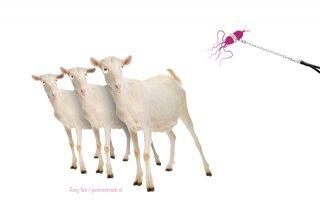 %27Para+is+bij+melkgeitenbedrijf+beheersbaar%27
