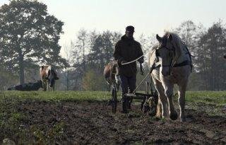 Akkerbouwer zoekt paard