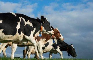 Dierenartsen+wijzen+op+infectieziekten+bij+aankoop+vee