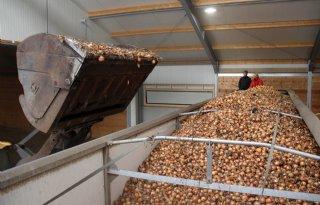Nederland+mag+weer+zuivel+en+uien+verkopen+aan+Indonesi%C3%AB