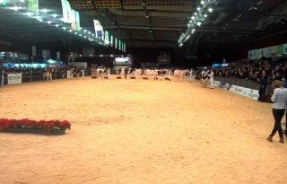 TV: Hoog niveau Holsteiners bij HHH
