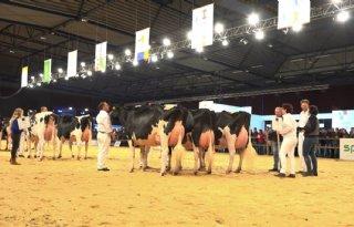 CRV+geeft+%27Wat+zijn+de+mooiste+koeien%27+nieuwe+impuls