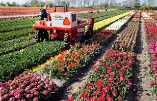 CNB: inleveren zeggenschap is struikelblok voor kwekers