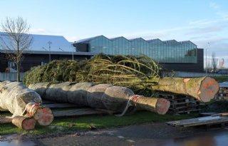 Megakerstboom+klaar+voor+transport+naar+de+Dam