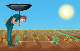 Boeren+moeten+leren+zuinig+te+zijn+met+regenwater