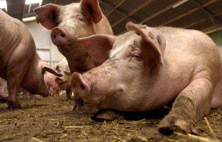 %27Met+big+data+kun+je+iets+zeggen+over+welzijn+varkens%27