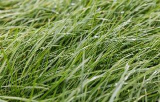 Meer+gras+van+eigen+land%3A+wat+doen+alle+elementen%3F