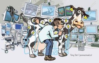 Koeien+van+Nieuwlaar+spelen+hoofdrol+in+proef