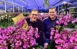 Stolk+Orchids+verpakt+plant+in+papier