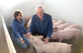 Varkenshouders in Veulen breiden voorzichtig uit