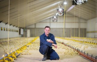 Keurmerkloze+eieren+verkocht+als+Beter+Leven%2Deieren