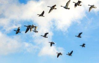 Rechter+keurt+ganzenvangst+rond+luchthavens+goed