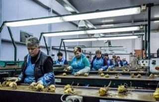 Arbeidsmigranten+stuwen+economische+groei