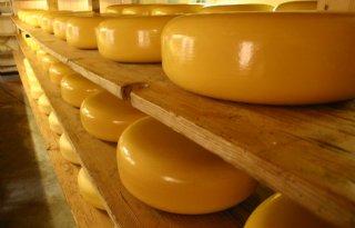 Cheese+Valley+wordt+stichting