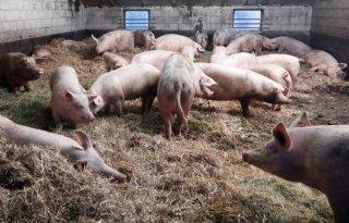 %27Voer+varkens+vooral+van+eigen+grond%27