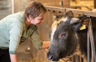 Familie+Van+Steeg+verkoopt+kalfsvlees+van+stieren