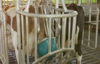 Toekomst zonder drijfmest in veehouderij