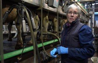 65%2Djarige+Mieke+Braamse+melkt+na+carri%C3%A8reswitch+koeien