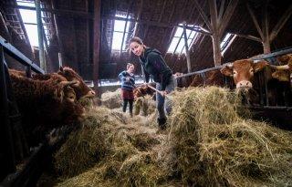 Zussen+strijden+voor+nieuwe+boerderij+na+beving