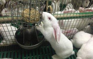 Schouten+wil+centrale+registratie+konijnensterfte