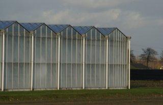 ZLTO+wil+perspectief+voor+Brabantse+glastuinbouw