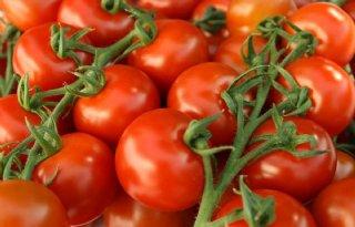 ZON+broedt+op+termijnmarkt+voor+tomaat