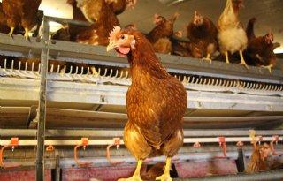 AVINED+houdt+zorgen+over+vogelgriep+Midden%2DEuropa