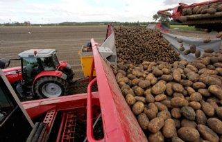 Lagere+termijnnotering+voor+aardappelen+van+oogst+2019