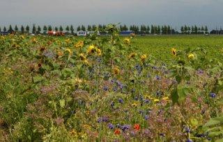 Onkruid klepelen, bloemen zaaien en insecten tellen