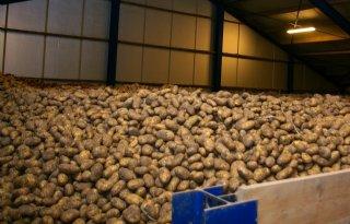 Nauwelijks+nog+vrije+aardappelen+in+Belgi%C3%AB