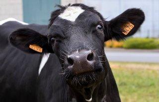 Dier%26amp%3BRecht+eist+hardere+aanpak+dierverwaarlozing