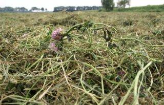 Mengsel+gras%2Dklaver+past+binnen+kringlooplandbouw