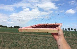 Steriele+insectentechniek+wapen+tegen+uienvlieg