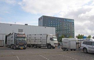 Sleeswijk%2DHolstein+verbiedt+export+vee+naar+derde+landen