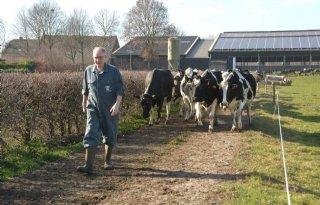 Brabantse+boer+al+volop+aan+het+weiden
