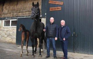 VDL+Stud+bouwt+voortplantingscentrum+voor+paarden