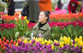 Publiek+plukt+gratis+tulpen+in+hartje+San+Francisco